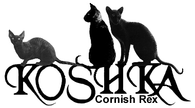 Koshka Cornish Rex, Breed Characteristics, Rex Coat, History, Show Cats & Judging, Raising Weak Kittens, Funny Cats, Links to Other Breeders/Cat Sites/Web Graphics